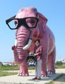 Marketing gone wrong? The Pink Elephant